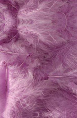 Plumes lilas