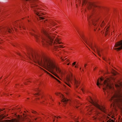 Plumes dinde rouge